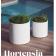 Pot couleur Design Hortensia